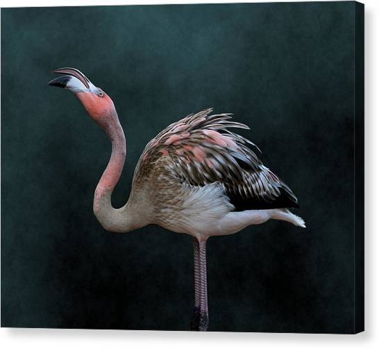 Song Of The Flamingo Canvas Print