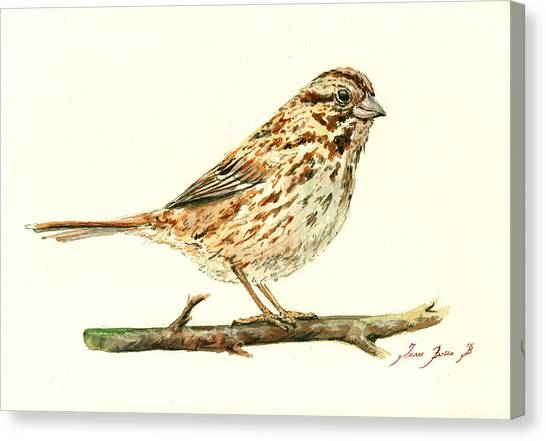 Sparrows Canvas Print - Song Sparrow by Juan  Bosco