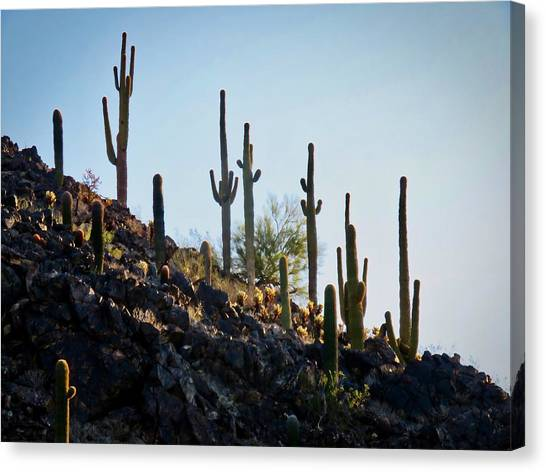 Sonoran Desert Saguaro Slope Canvas Print