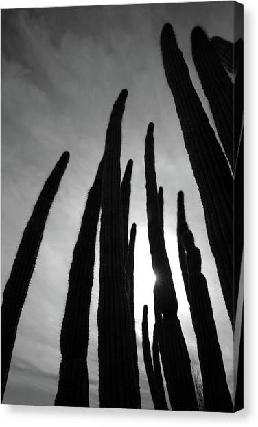 Sonoran Spires Canvas Print by Robin Street-Morris