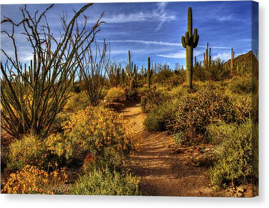 Sonoran Spring 01 Canvas Print