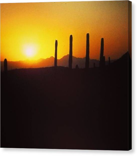 Sonoran Desert Canvas Print - Sonoran Sunset by Laurie Gresch