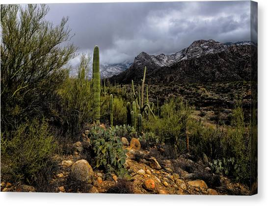 Sonoran Winter No.1 Canvas Print