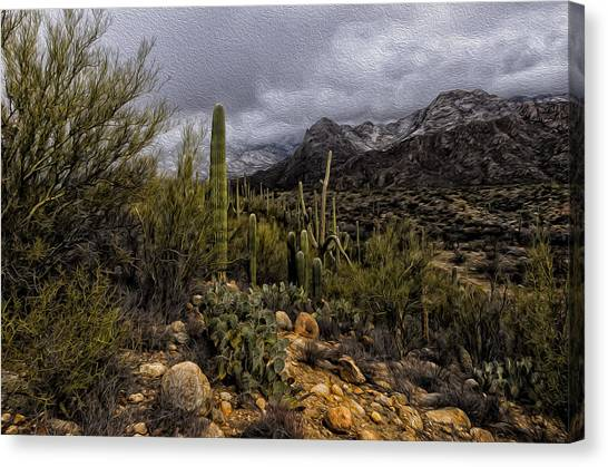 Sonoran Winter No.3 Canvas Print