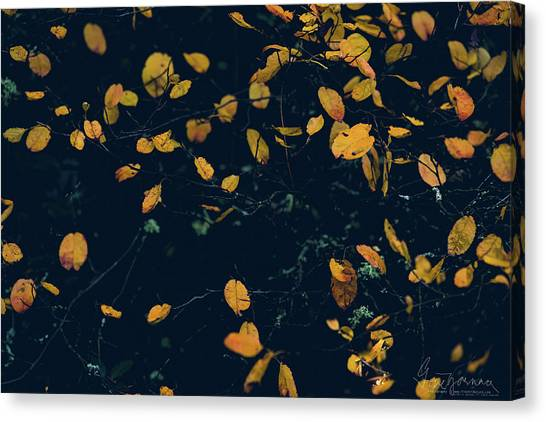 Canvas Print featuring the photograph Soon They Fall by Gene Garnace