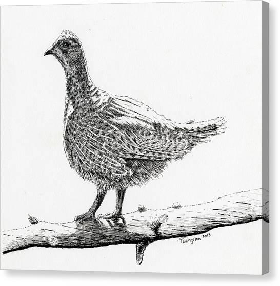 Sooty Grouse Canvas Print