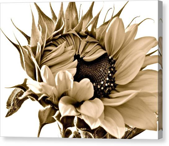 Sophisticated Canvas Print