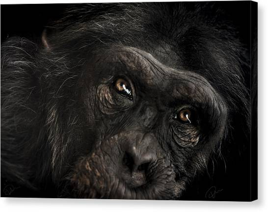 Close-up Canvas Print - Sorrow by Paul Neville