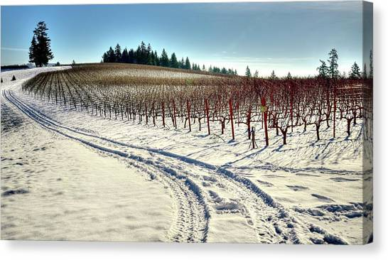 Soter Vineyard Winter Canvas Print