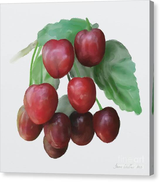 Sour Cherry Canvas Print