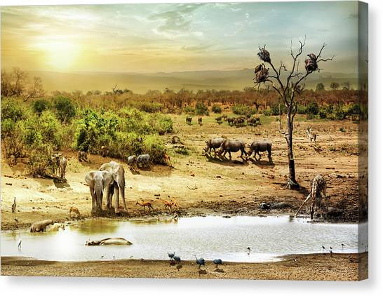 Vultures Canvas Print - South African Safari Wildlife Fantasy Scene by Susan Schmitz