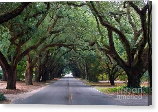 South Boundry Canvas Print