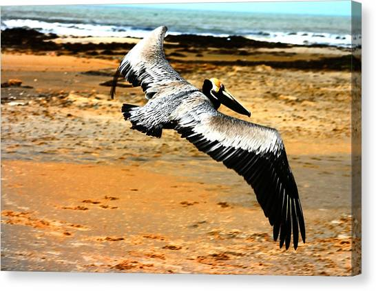 South Padre Pelican Canvas Print by Laurie Prentice