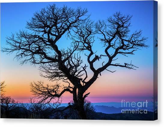 North Rim Canvas Print - South Rim Tree by Inge Johnsson