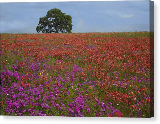 South Texas Bloom Canvas Print