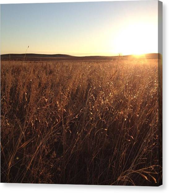 Prairie Sunrises Canvas Print - #southdakota #sodak #prairie #grass by Will Livermont