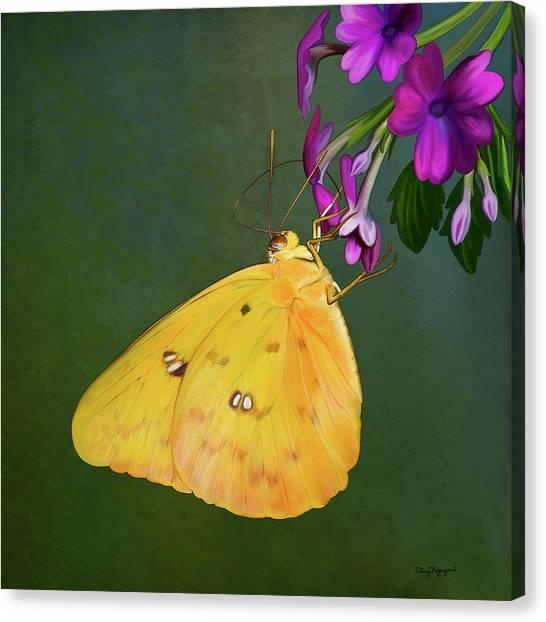 Southern Dogface Butterfly Canvas Print