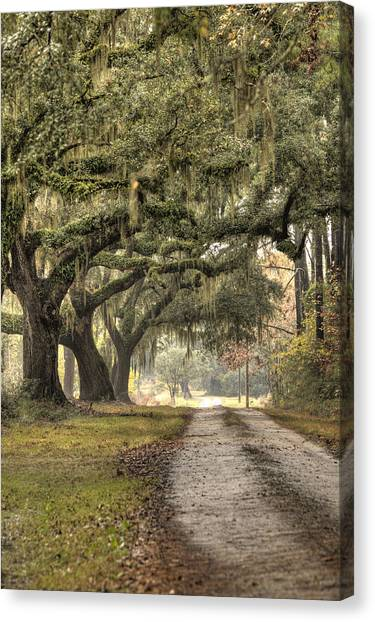 Southern Drive Live Oaks And Spanish Moss Canvas Print
