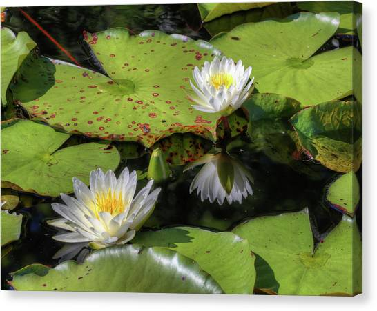 Southern Lilies  Canvas Print by JC Findley