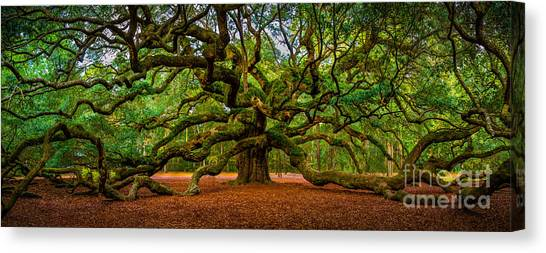 Angel Oak In Charleston Canvas Print