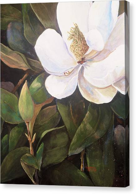 Southern Magnolia Canvas Print by Jimmie Trotter