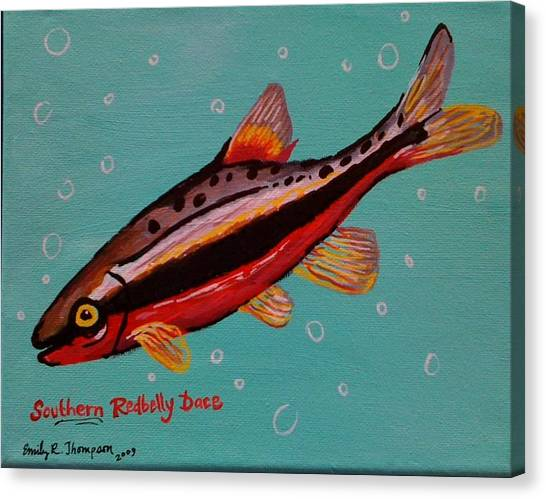 Southern Redbelly Dace Canvas Print by Emily Reynolds Thompson