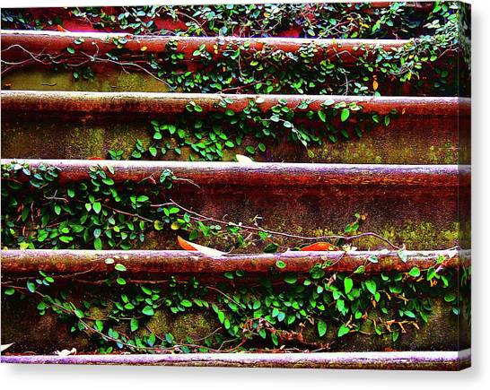 Southern Ivy Steps Canvas Print by JAMART Photography