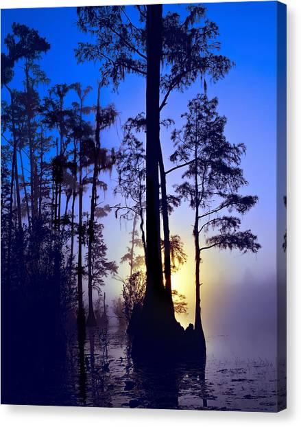 Okefenokee Canvas Print - Southern Swamp Twilight by Daniel Hagerman