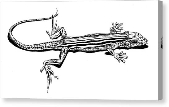 Southwest Lizard Canvas Print by Stephen Taylor