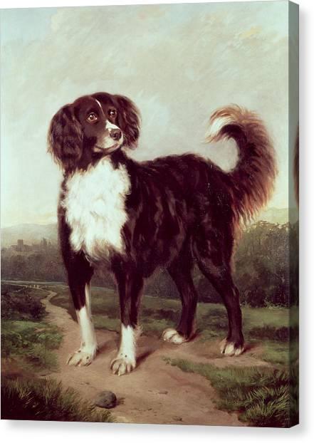 67 Canvas Print - Spaniel by JW Morris