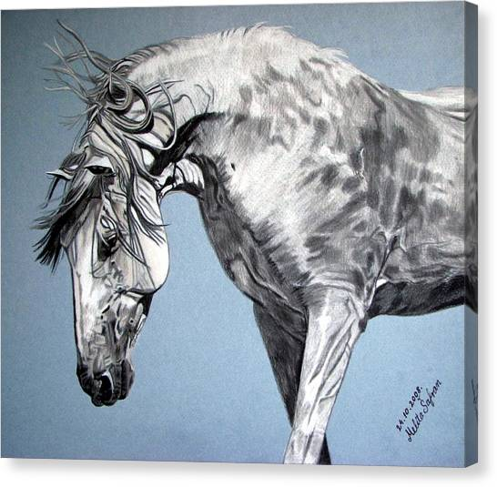Spanish Horse Canvas Print