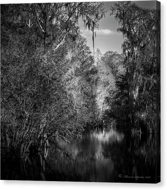 Murky Canvas Print - Spanish Moss by Marvin Spates
