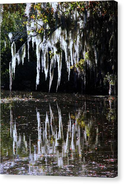 Spanish Moss Reflection Canvas Print