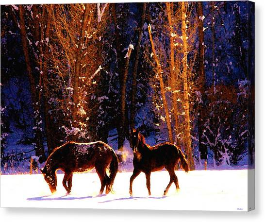 Spanish Mustangs Playing In The Powder Snow Canvas Print