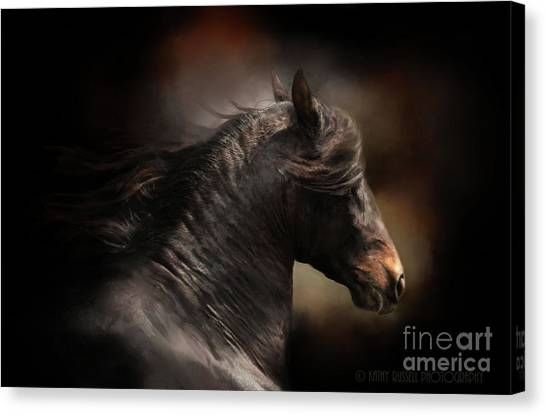 Spanish Stallion Canvas Print