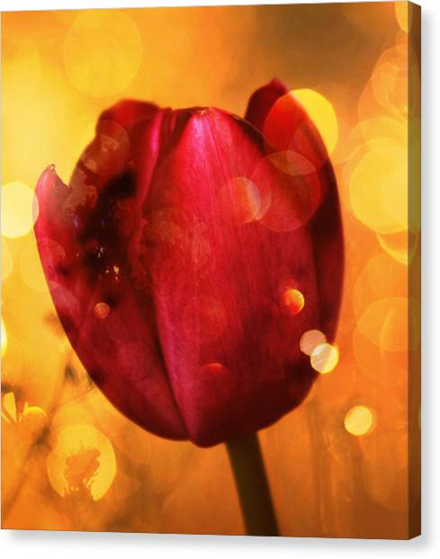 Floral Digital Art Canvas Print - Sparkle Of The Tulip by Cathie Tyler