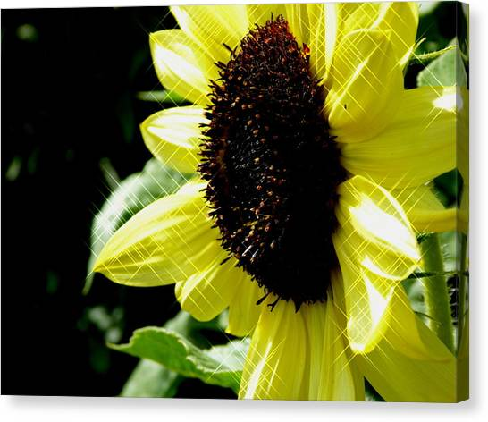 Sparkle Sunflower Canvas Print