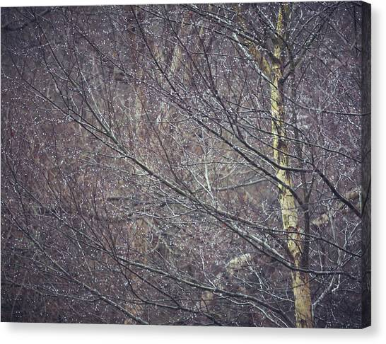 Sherwood Forest Canvas Print - Sparkles by Chris Dale