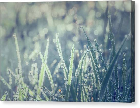 Canvas Print featuring the photograph Sparklets by Gene Garnace