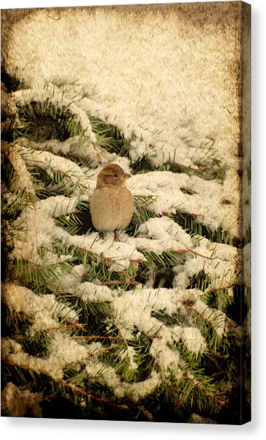 Canvas Print featuring the photograph Sparrow In Winter II - Textured by Angie Tirado