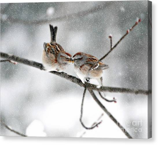 Sparrow Kiss Canvas Print