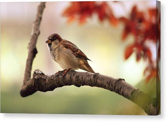 Wrens Canvas Print - Sparrow by Maye Loeser