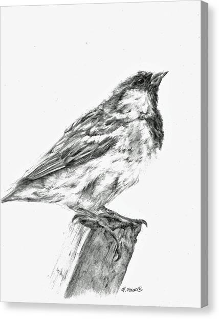 Sparrow Study Canvas Print