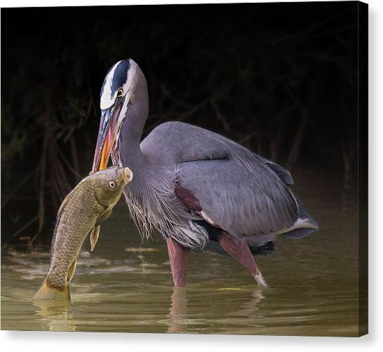 Spear Fisher Canvas Print