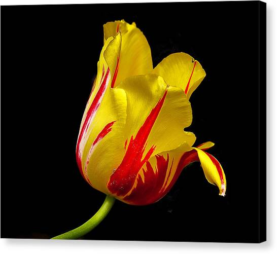 Special Flower For Someone Special Canvas Print