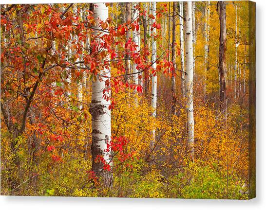 Special Place In The Forest Canvas Print