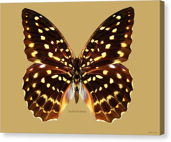 Speckled Hen Butterfly Canvas Print