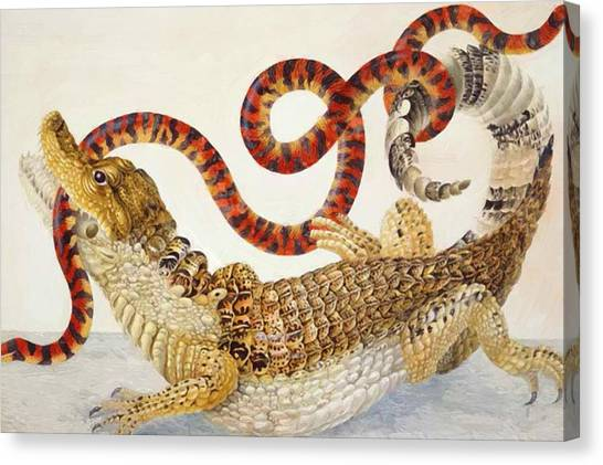 Coral Snakes Canvas Print - Spectacled Caiman Caiman Crocodilus And A False Coral Snake Anilius Scytale by Merian Maria Sibylla