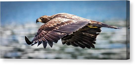 Speeding Canvas Print