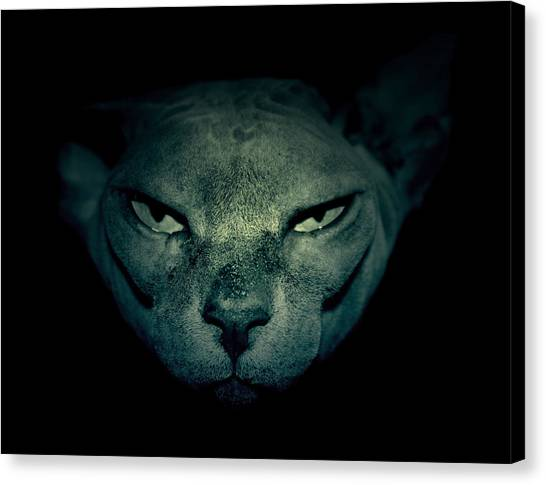 Sphynx Cats Canvas Print - Sphynx Cat by Mickael PLICHARD